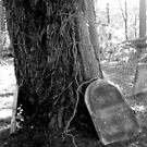 Final Resting Place...A Tree by natnvinmom