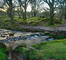Dawn Light: Burrator Woods Dartmoor.  by DonDavisUK