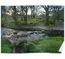 Dawn Light: Burrator Woods Dartmoor.  Poster