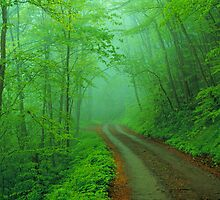 BALSAM MOUNTAIN ROAD by Chuck Wickham