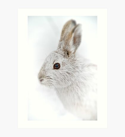 Showshoe Hare Art Print