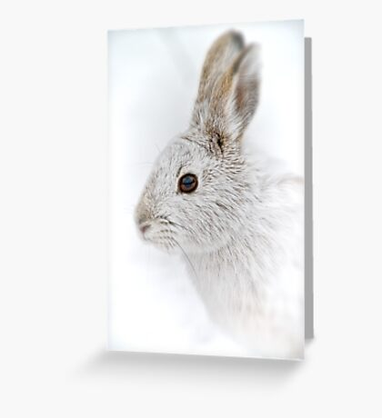 Showshoe Hare Greeting Card
