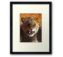Pussy Cat Framed Print