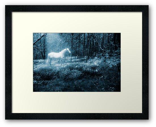 Under a moonlit sky by John Edwards