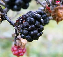 Berry Close by JP Maloney