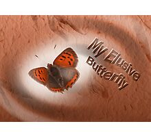 Elusive Butterfly Photographic Print