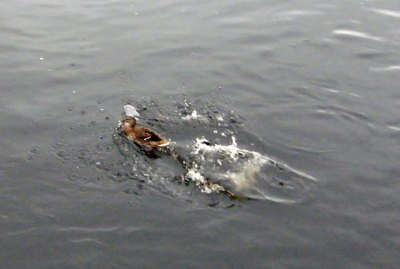 Splash Down by JP Maloney