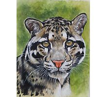Berry's Clouded Leopard Photographic Print