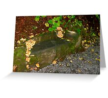 Nature Reclaims Old Bench # 7 Greeting Card