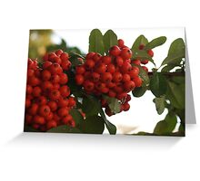 Droplets on Pyracantha Berries Greeting Card