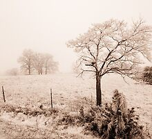 Ice Storm by Brent Craft
