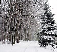 A SNOWY LANE UNFRAMED by tfm446