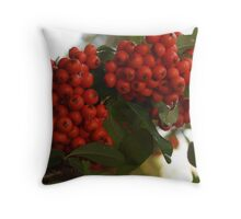 Pyracantha Berries after Rain Throw Pillow