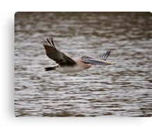 Brown Pelican Review Pass Canvas Print