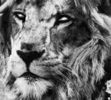 First Lion - White Eyes Sticker