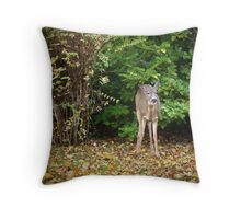 Fall Doe Eating A Apple Throw Pillow