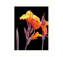 Orange Canna Lily Art Print