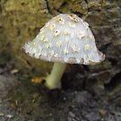 Little Mushroom by Tracy Wazny