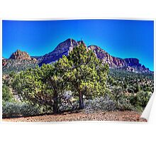 Sedona Vortex Junipers Poster