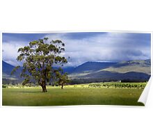 country landscape Poster