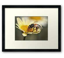 Sucker For Gold Framed Print