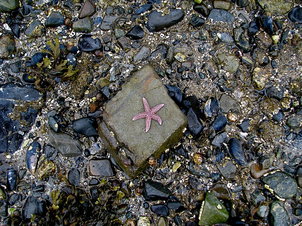 Starfish by Spyte