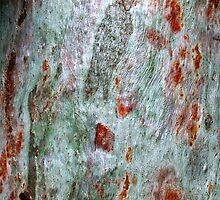 """Brush-strokes on Bark"" by debsphotos"