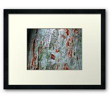 """""""Brush-strokes on Bark"""" Framed Print"""