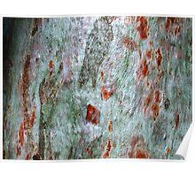 """""""Brush-strokes on Bark"""" Poster"""