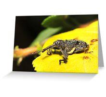 Weevil on lantana Greeting Card