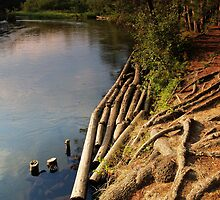 Manistee River by Megan Noble