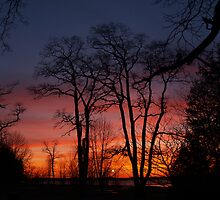 Trees at Sunset by Megan Noble