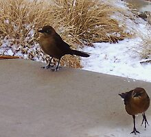 Snow Birds by R&PChristianDesign &Photography