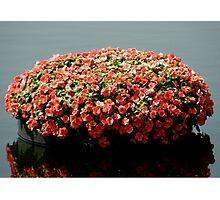 Beautiful Flowers of the Water Photographic Print