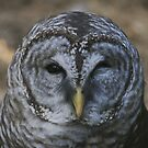 A wise old owl by miradorpictures
