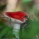 Fungal bloom by miradorpictures