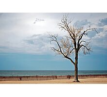 Beech On Beach Photographic Print