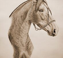 """Argentinian Beauty"" - Criollo mare - Sepia by SD 2010 Photography & Equine Art Creations"