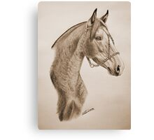 """Argentinian Beauty"" - Criollo mare - Sepia Canvas Print"