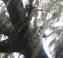 Live oak tree with Spanish moss blowing in wind by Nadia Korths
