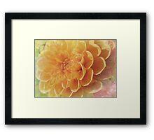 Pastel Dahlia Framed Print