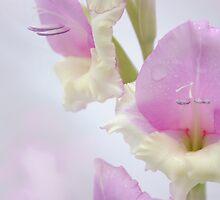 Gorgeous Gladioli by Sarah Cowan
