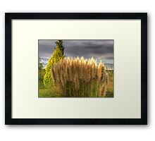 Nature Test HDR Shot Framed Print
