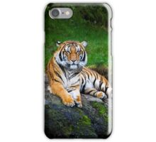 Colorful Kitty iPhone Case/Skin