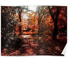 Autumn Sunlight Poster