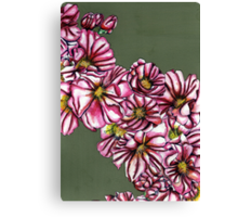 Almond tree flowers Canvas Print