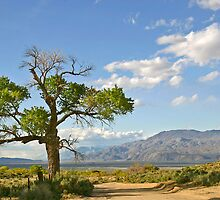 Owens Valley, CA. by Erwin G. Kotzab