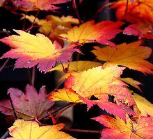 Fiery Leaves by Miko Coffey