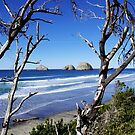 Oregon Coast by Don Siebel
