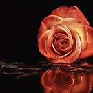 Rose reflection by Lyn Evans